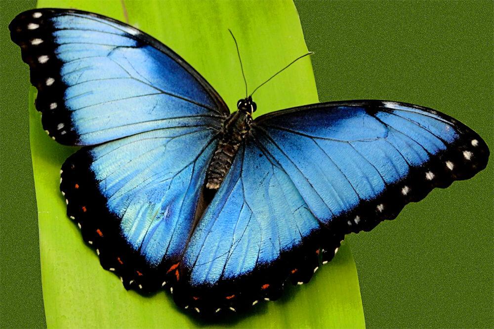 Las mariposas más extrañas, brillantes y hermosas viven en Honduras