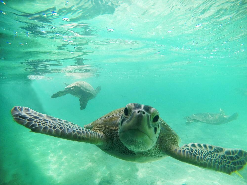 Protejamos a esta especie en peligro de extinsión.