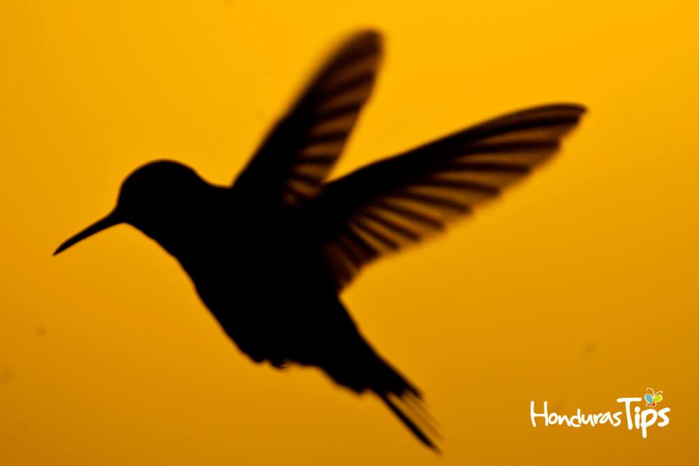 Solo la silueta de esta ave enamora por su belleza.