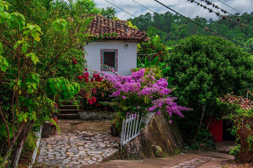vegetación en casas de Cedros.