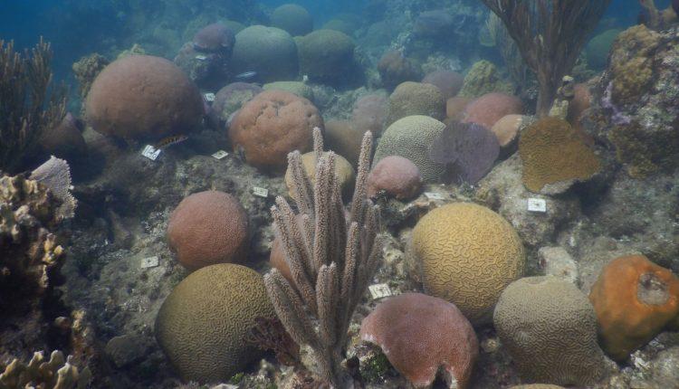 Roatán posee el segundo arrecife coralino más grande del mundo.
