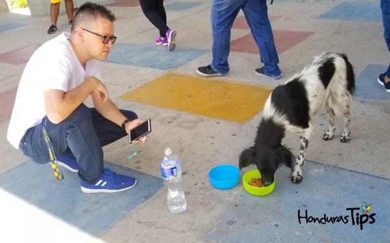 Enersy O'Hara al momento de alimentar a uno de los perros en la universidad.