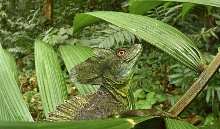 Los reptiles y anfibios fueron de las especies más documentadas.
