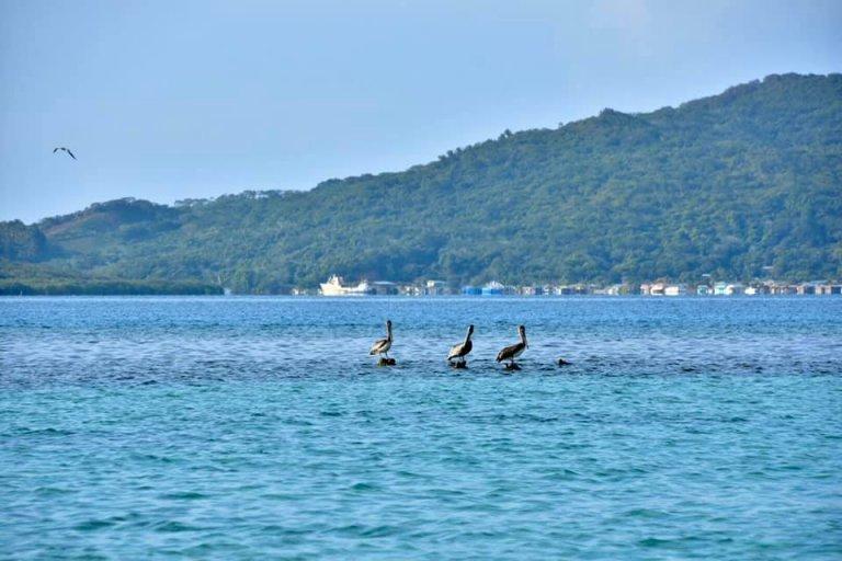 El agua cristalina y las especies que habitan Guanaja son un deleite para el visitante.