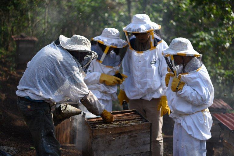 Los productores extranjeros tendrán la oportunidad de conocer acerca de la polinizacion de las abejas en Honduras.