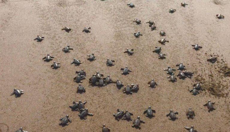Todos podemos sumarnos a la conservación de la tortuga con los grupos de voluntariado.