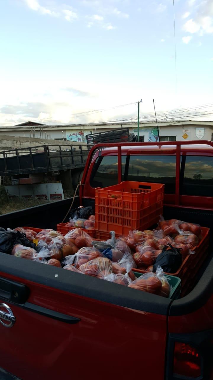 1800 libras de tomates.