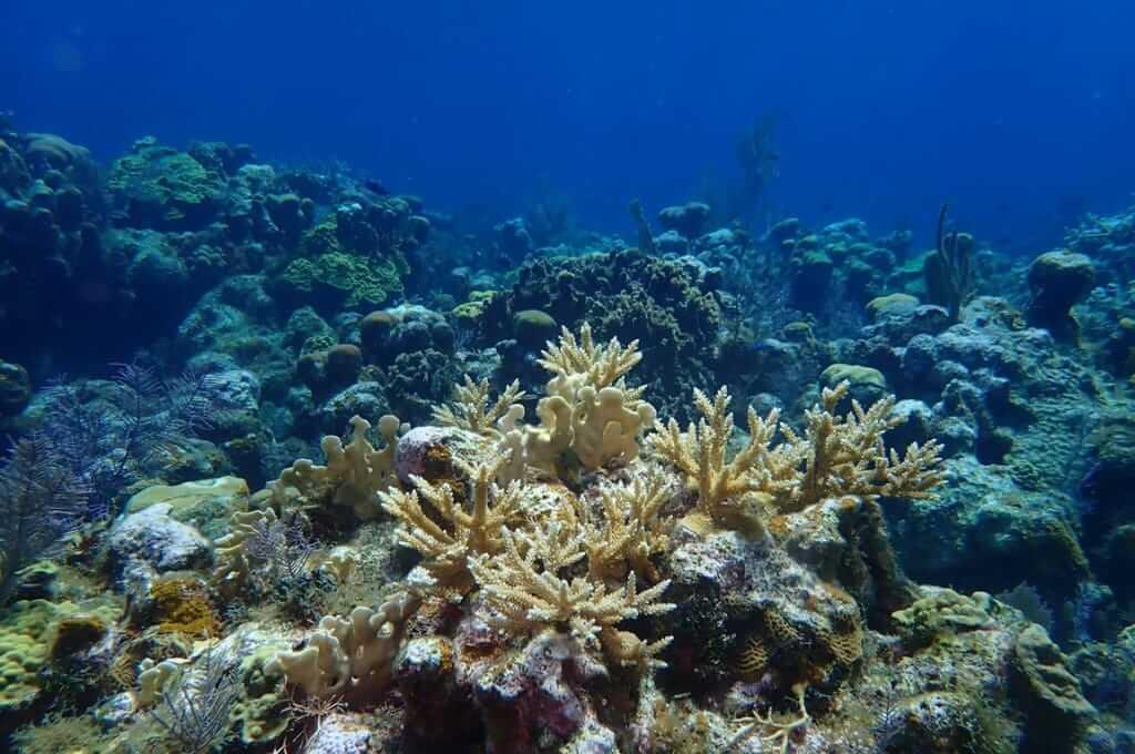 Roatán Marine Park, una organización comprometida con el cuidado del océano y sus ecosistemas